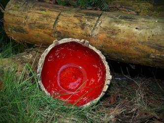 Schale mit Häusern rot