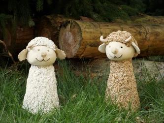 Schafe weiß und braun